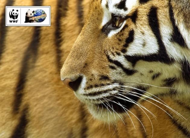 cropped-tigre_1280x960.jpg