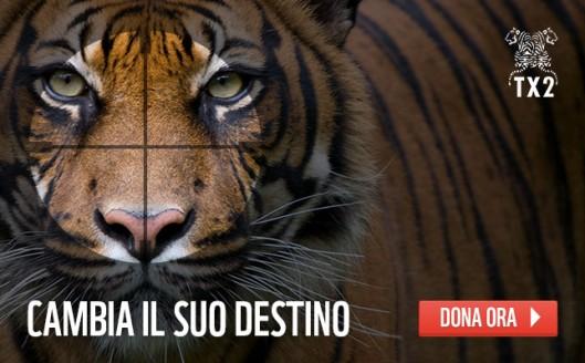 visual_tigre